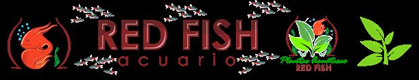 Acuario Red Fish