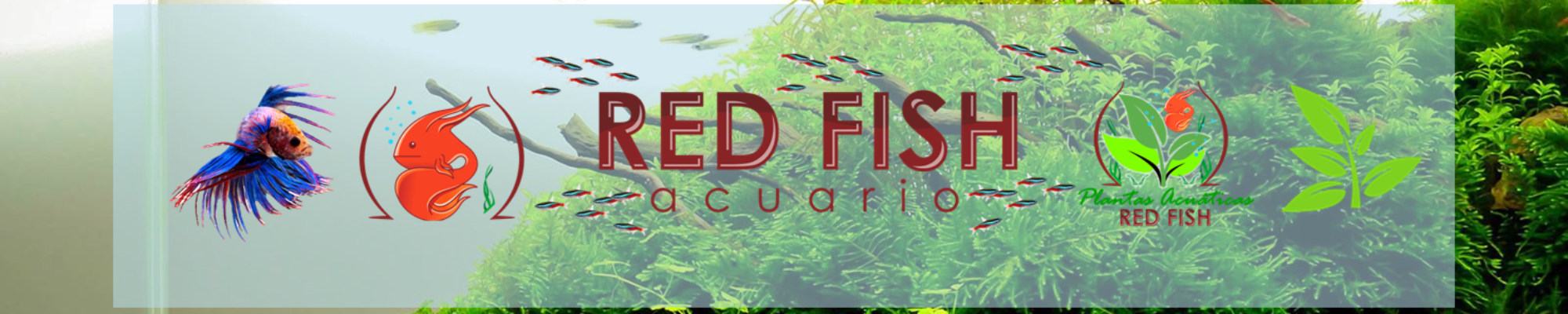 Acuario Red Fish
